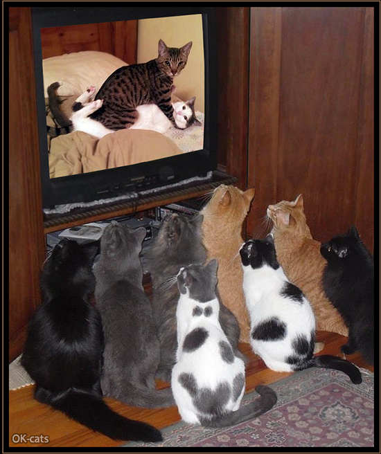 Photoshopped Cat picture •  8 curious cats watching 2 weird cats on TV  OWNED!  The Purrfect crime doesn't exist!