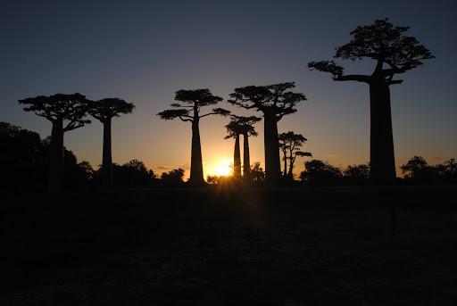 Sonnenuntergang in der Baobab Alley