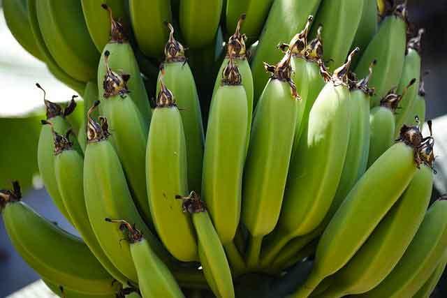 هل الموز يجعلك تكتسب الوزن