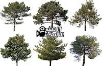 أشجار png