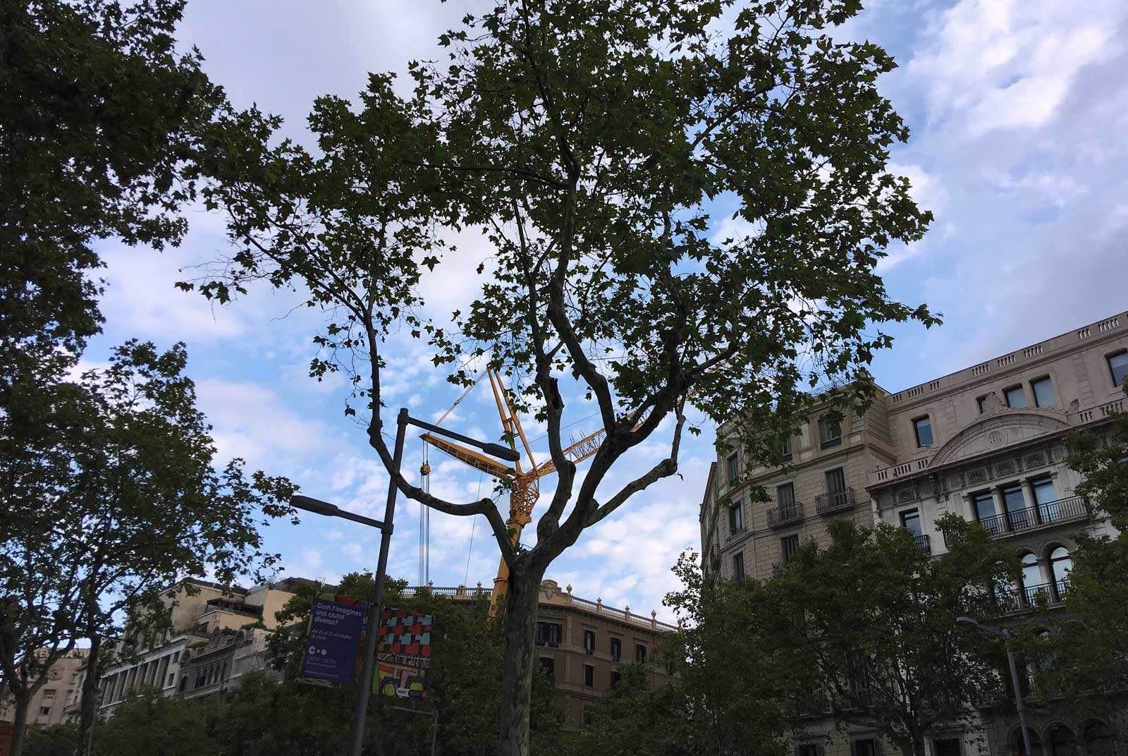 Árbol y grua en paralelo. Paseo de Gracia. Barcelona