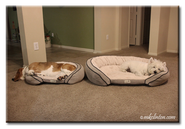 Basset Hound and Westie in their dog beds