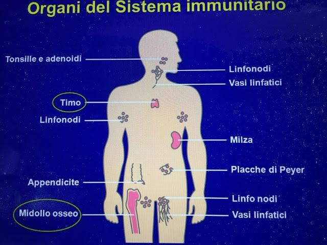 Salute e Benessere - Blog di Crescita Personale - Sistema Immunitario