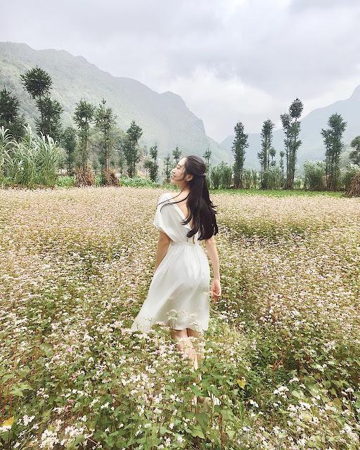 Mộc Châu – Mùa hoa tam giác mạch khoe cánh hồng