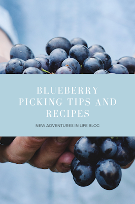 Blueberry picking tips