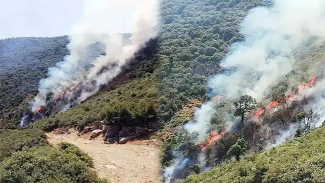 عاجل ...بالفيديو إندلاع حريق بغابة ضواحي مدينة شفشاون