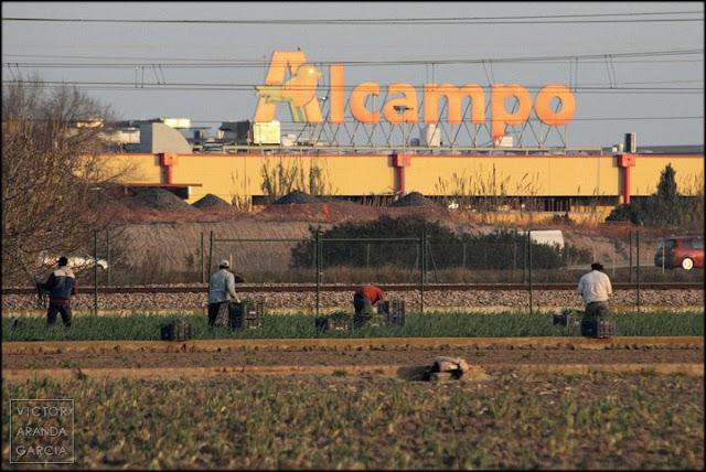 Fotografía de trabajadores del campo recogiendo cebollas delante de una tienda de Alcampo
