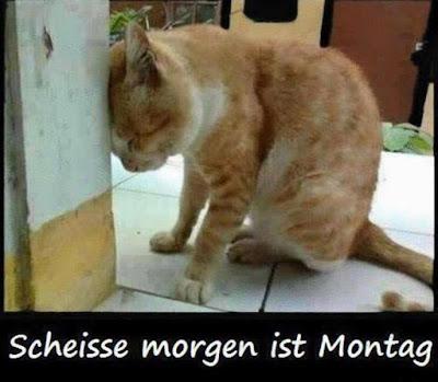 Scheisse morgen ist Montag, Katze, Kater