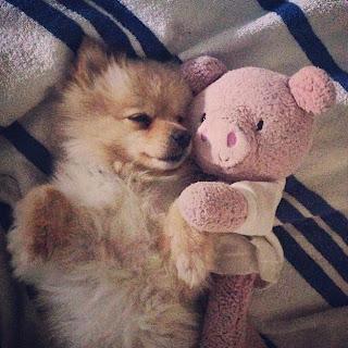 Shay Mitchell's dog Bailey
