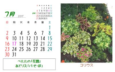 2017年 花暦 7月