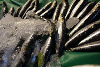 Ikan Teri, Makanan, Kalsium Kehamilan