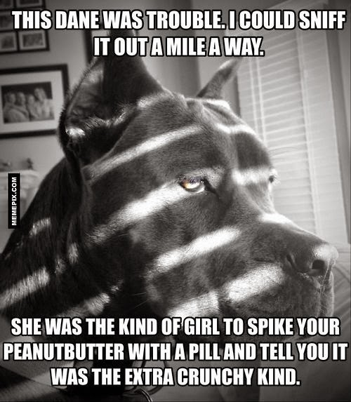 Funny Great Dane Dog Trouble Joke Picture