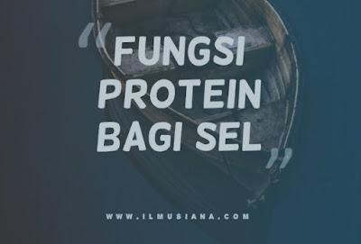 Fungsi Protein Bagi Sel