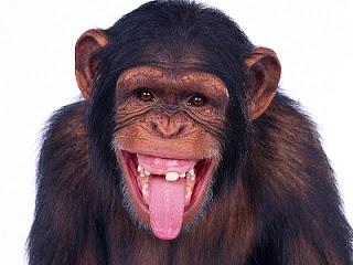 Mono, boca y sentido del gusto
