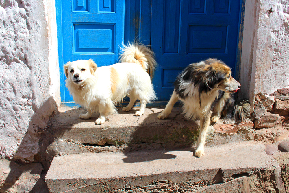 Dogs in Cusco, Peru - lifestyle & travel blog