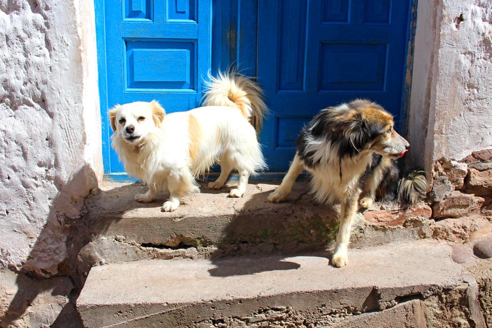 Dogs in Cusco, Peru - lifestyle & travel blog