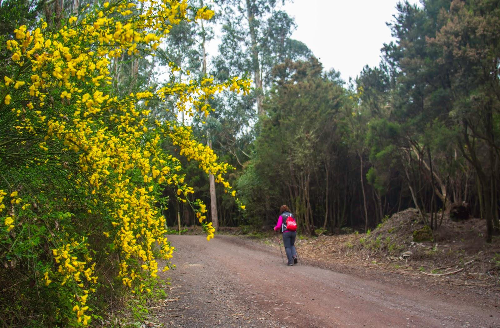 CC critica que se pueda subir al monte de Tenerife a pesar del riesgo