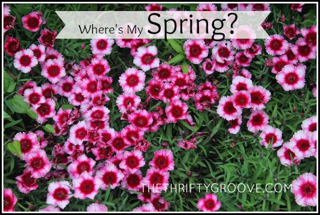Where is my springs?