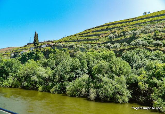 Terraços de cultivo das vinhas (socalcos), no Vale do Rio Douro, entre Peso da Régua e Pinhão, Portugal