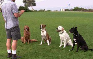 Addestramento cani,corsi e libri...