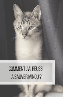 Comment j'ai réussi à sauver Minou alt maltraitance chat animaux siamois