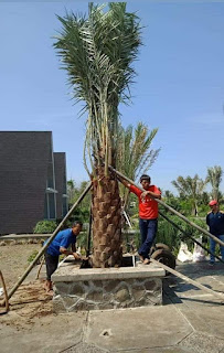 Jasa Pembuatan Taman Murah - Tukang Taman Mininalis - Jasa Renovasi Taman