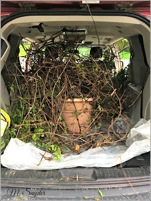 May 29, 2019 Heading to the community compost pile.