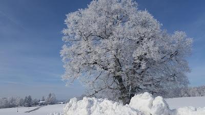 Zu den Winterfotos