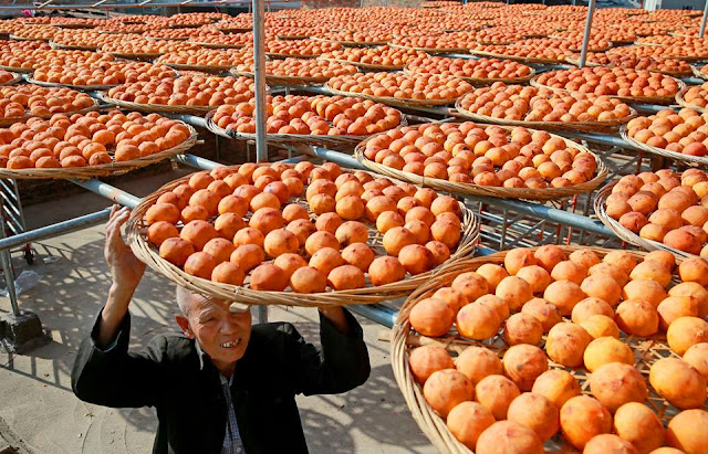 "Striking images of ""lucky"" seasonal fruit drying in the sun"