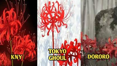 5 Fakta Higanbana, Si Bunga Kematian Yang Sering Muncul didalam Anime