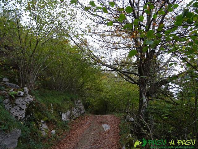 Bosque camino a la Xamoca por debajo de Llagos