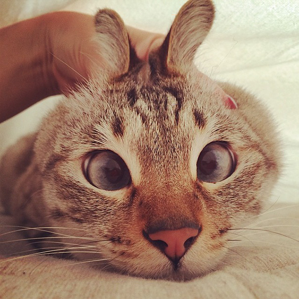 Say hi to the bunny cat!