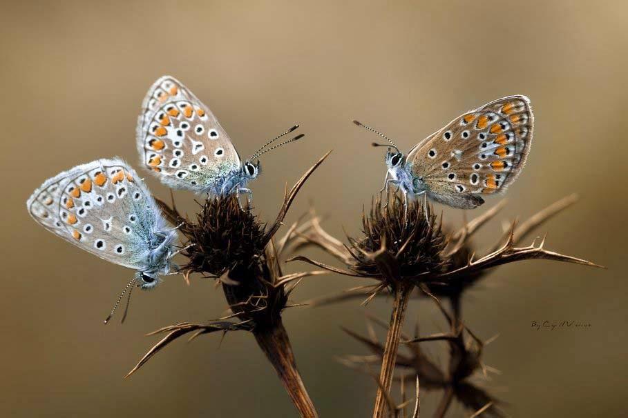 butterflies-flowers