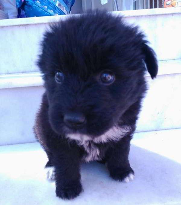 cachorra de tamaño pequeño mediano