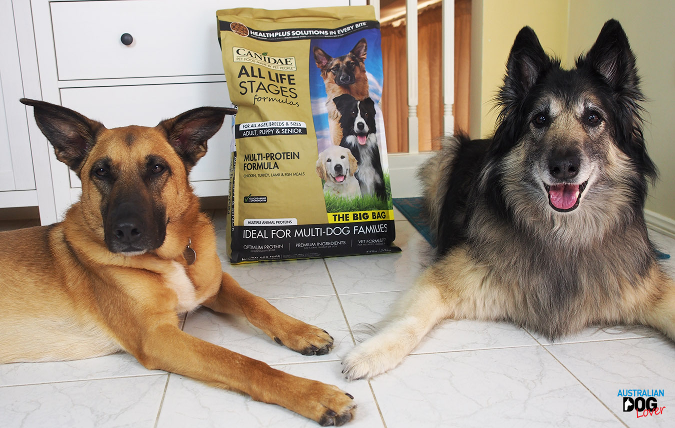 Porthos Malinois and Conner Belgian Tervueren sit next to Canidae All Life Stage Multi-Protein formula