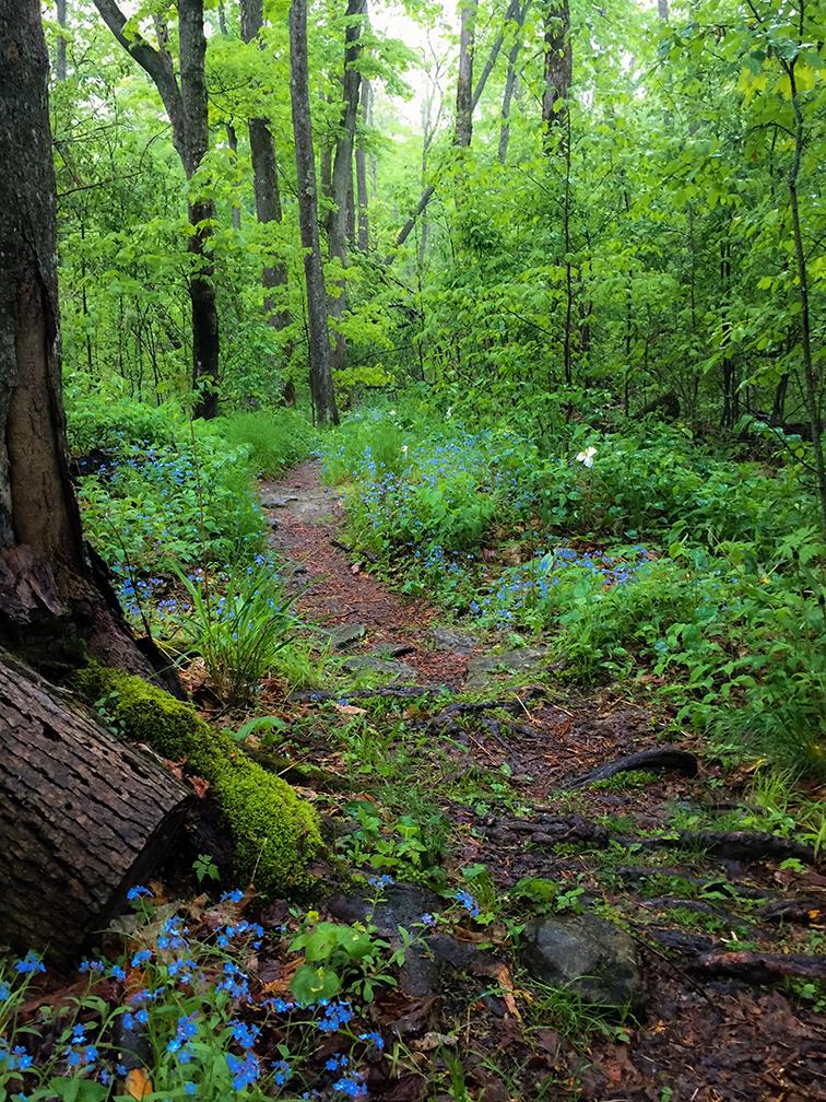 Deathdoor Bluff at Door Bluff County Park in Door County WI & Wisconsin Explorer: Hiking Door Bluff Headlands in Door County pezcame.com