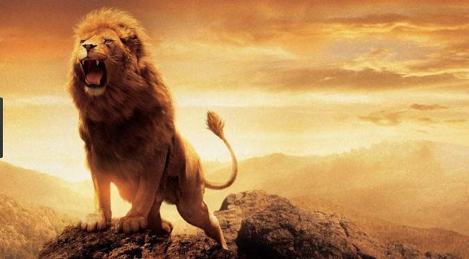 Lion Wallpaper Is A With High Size You Can Get Now And Use It As Desktop Iphone Android More