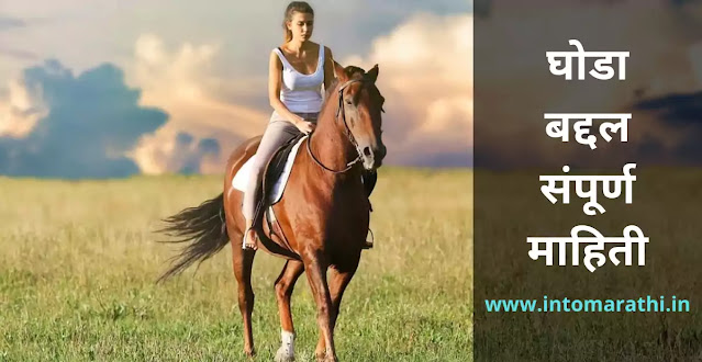 horse information in Marathi