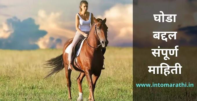 घोडा बद्दल संपूर्ण माहिती- horse information in Marathi