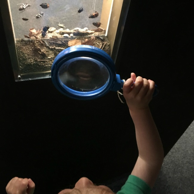 National-Museum-Cardiff-a-toddler-with-magnifying-glass