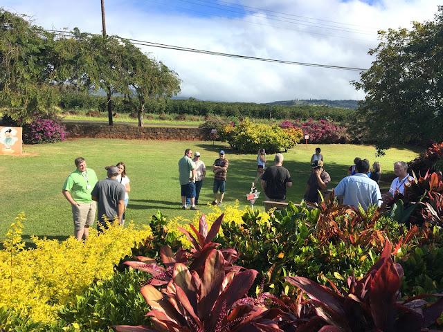 Kauai coffee grounds