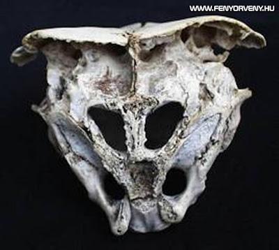 Valóban idegen lényé a Rodope-i koponya?