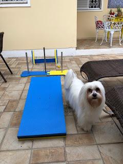 aparelho exercício para cães