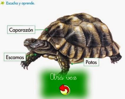 http://primerodecarlos.com/SEGUNDO_PRIMARIA/diciembre/Unidad5/actividades/cono/aprende_reptiles.swf