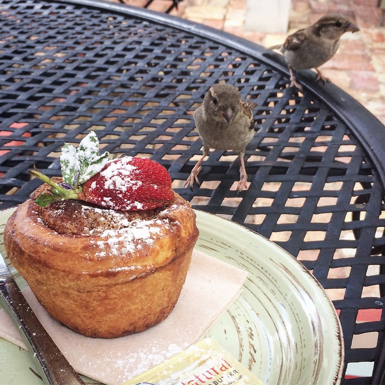 Cheeky sparrows want Miss fab's cinnamon Brioche...