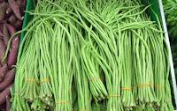 tanaman yang menguntungkan, sayuran yang menguntungkan, usaha sayuran, tanaman yang mudah ditanam, tanaman yang cepat berhasil, kacang panjang, sayur kacang panjang