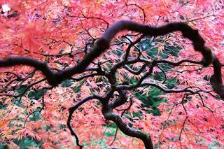 الحديقة اليابانية المذهلة أمريكا japanesegarden15.jpg
