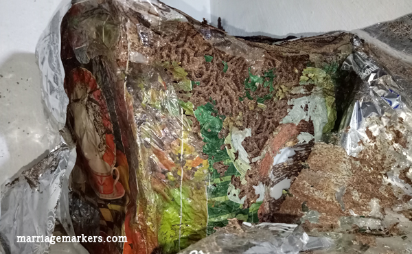 how to get rid of termites - pest control