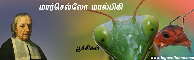 மார்செல்லோ மால்பிகி