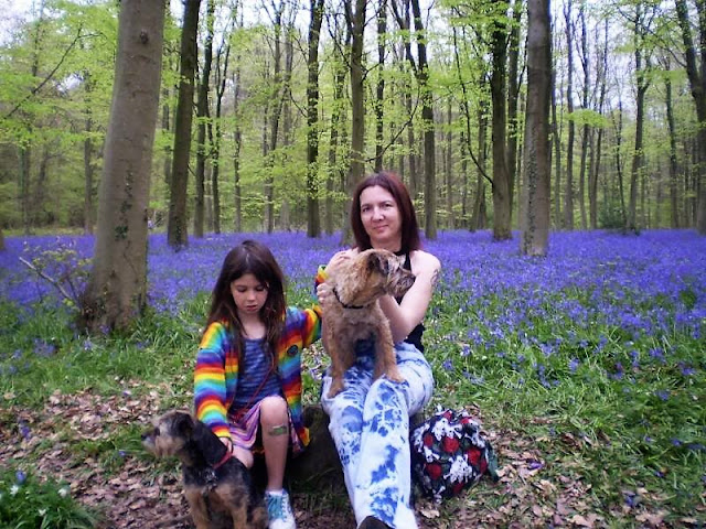 border terriers in a bluebell wood